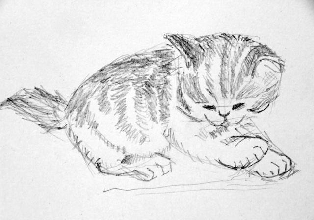 猫的素描画步骤图