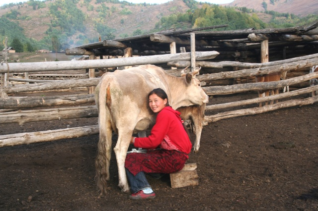 在自家的牛圈里挤奶的女孩向我露出了惬意的微笑