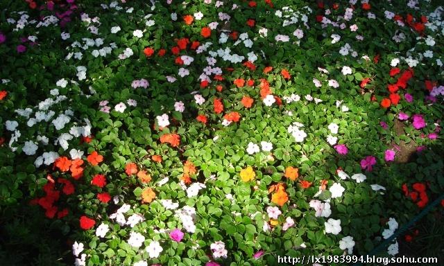幼儿园绿色大花布布置环境