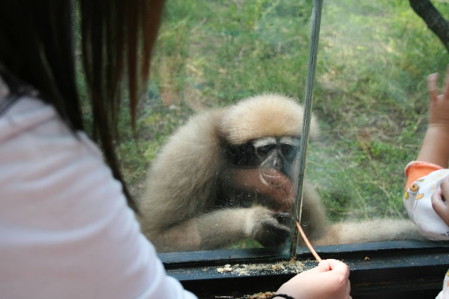 快乐的动物园之行——可爱的动物集合啦!