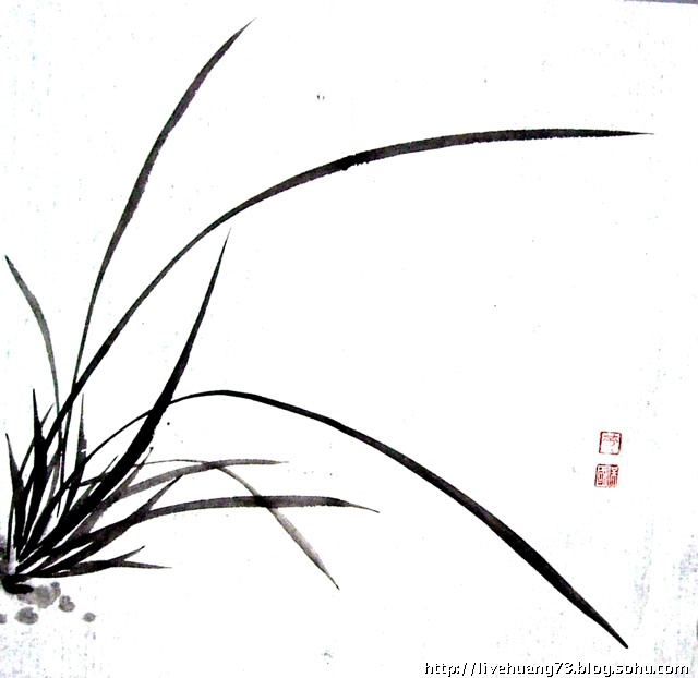 兰花画法铅笔画步骤图解