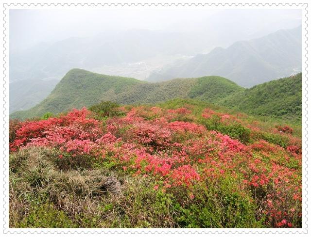 跟周围的山势比较,杜鹃开得那么鲜艳娇人,她完全忘了是在1500米的高处