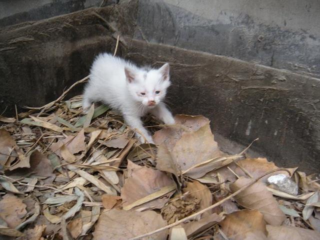 壁纸 动物 猫 猫咪 小猫 桌面 640_479