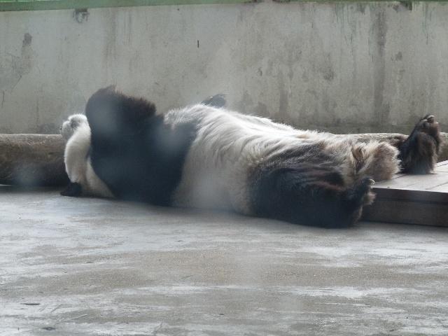 济南动物园叫金牛公园