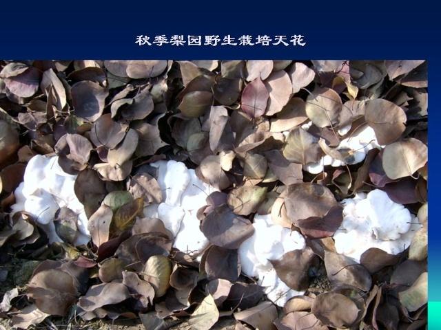 香菇木屑种植方法图片