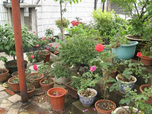 楼顶上的花园