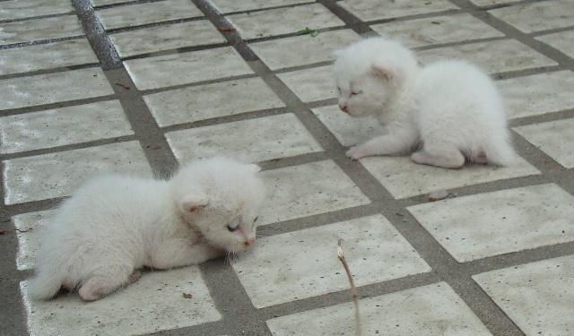 可怜的小猫咪_小猪日记_新浪博客