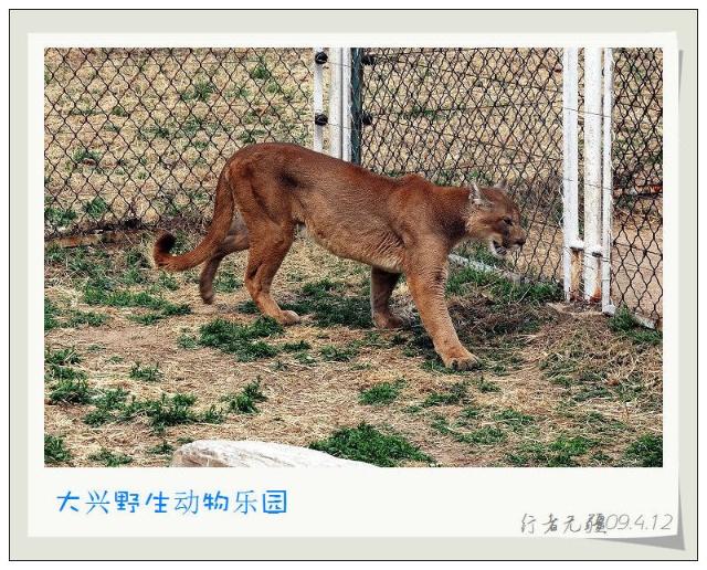大兴野生动物园游记- 行者无疆-搜狐博客