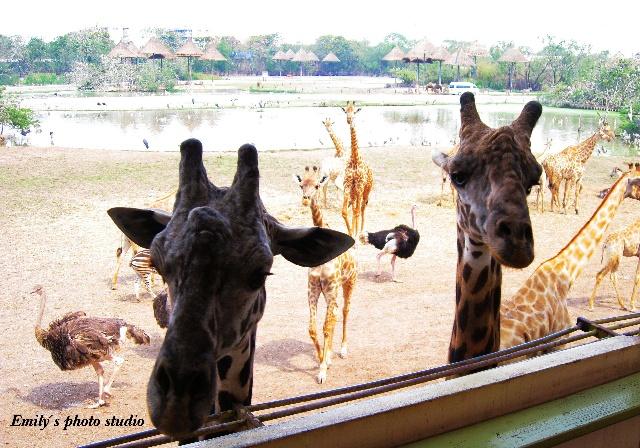 岁月承载记忆-泰国野生动物园