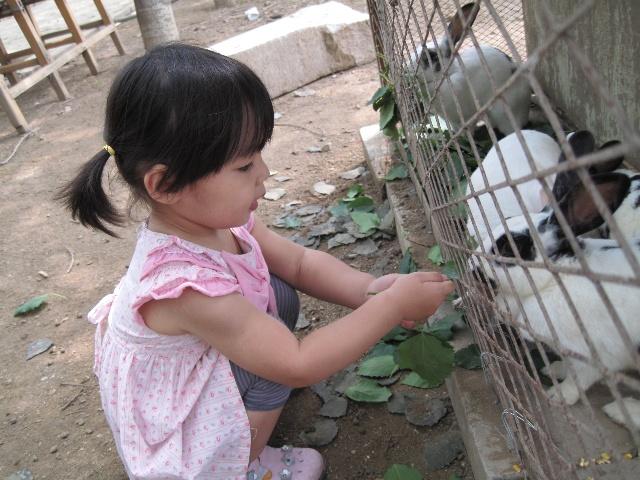 生态园喂养小动物