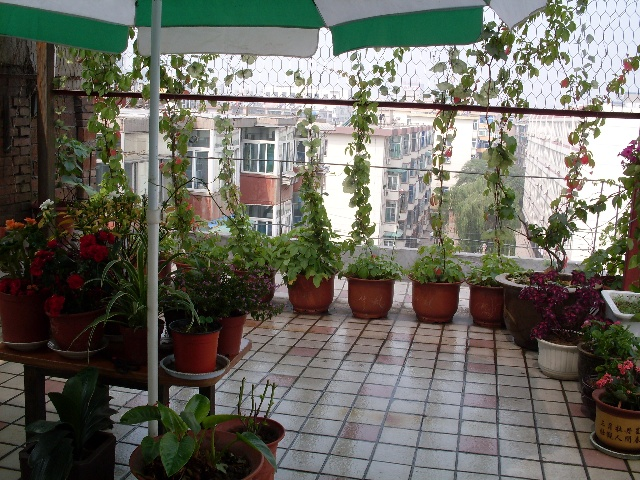 阳台花园设计,家庭阳台小花园效果图-桂芳园欧式花园社区 超大阳台