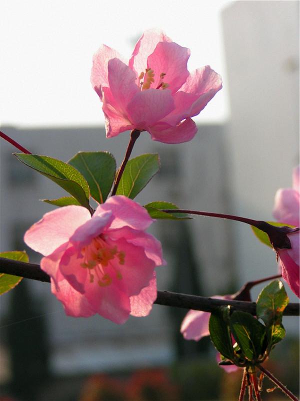 【你好,春天!】寻春归来