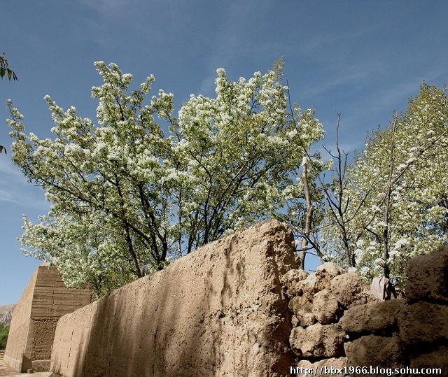 春天绿柳燕子图片