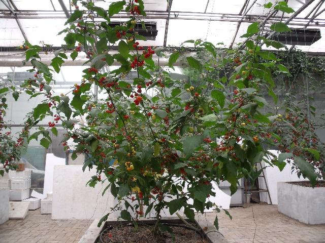 长在树上的蔬菜-简单-搜狐博客